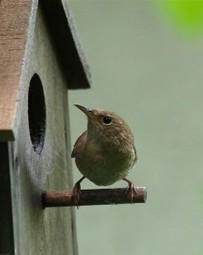 5 Ways to Get Birds to Nest in Your Birdhouse - A Child Grows | MySpy Birdhouse | Scoop.it
