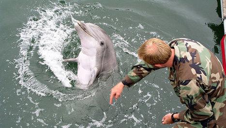 EEUU enviará delfines de guerra al mar Negro | Security & Intelligence OSINT | Scoop.it
