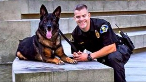 Calif. Hero Police Dog Shot in Line of Duty Reunited With Partner | Pet Sitter Picks | Scoop.it