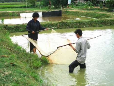 As farmland runs out, seafood looks better than you think   Sustain Our Earth   Scoop.it