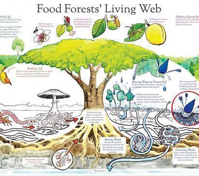Da cittadini a raccoglitori: la foresta in città | Il mondo che vorrei | Scoop.it