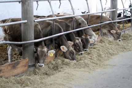 Carne sostenibile? Servono davvero 15mila litri d'acqua per un chilo?   Beef Facts   Scoop.it