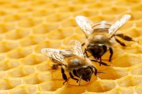 Les néonicotinoïdes menacés par une interdiction totale en Europe | apiculture 2.0 | Scoop.it