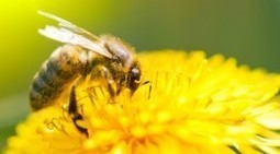Le prochain CIAG de l'INRA qui se déroulera le 25 novembre 2016 à Avignon s'intéressera aux abeilles | Les colocs du jardin | Scoop.it
