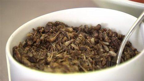 Des repas à base d'insectes dans les assiettes de l'Université de Winnipeg | ICI.Radio-Canada.ca | Entomophagy: Edible Insects and the Future of Food | Scoop.it