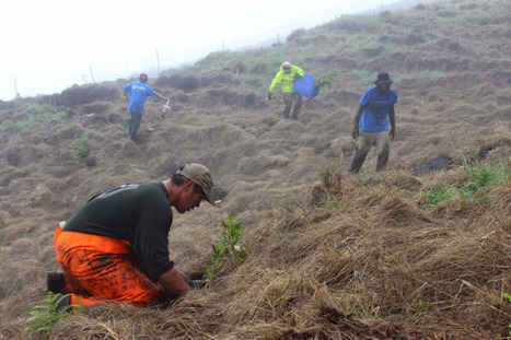 Volunteers aim to plant 20,000 trees to restore Haleakala's dry forests | Services & Products News | Scoop.it