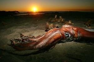 Squid Sperm Inseminates Elderly Woman'sMouth - CBS Seattle | Living | Scoop.it