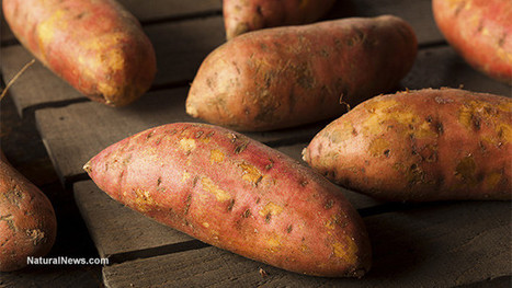 Why You Should Grow Sweet Potatoes in Your Self Reliance Garden | Gardening | Scoop.it