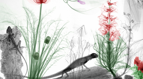 Scientist's colorized X-ray images of nature make for stunning art ... | Design | Scoop.it