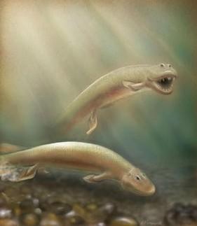 Las patas de los vertebrados se desarrollaron a partir de las aletas traseras de los peces | La célula | Scoop.it