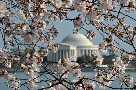 It's Almost Cherry Blossom Season! | Georgetown CCPE | Scoop.it
