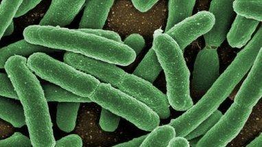 Microbiote intestinal,entre espoirs et promesses   Gastro-entérologie   Scoop.it
