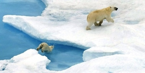 Offshore Blasting for Oil and Gas Put Arctic Animals in Danger | The Arctic Circle | Scoop.it