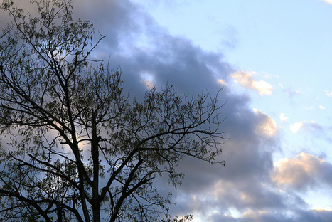 Black tree | Photography | Scoop.it