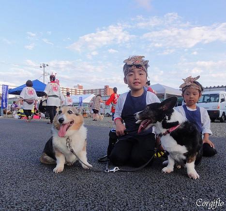 Petite fete au lotissement pres de chez moi | Journal de Flo et ses Corgis (+vidéos) | Japon : séisme, tsunami & conséquences | Scoop.it