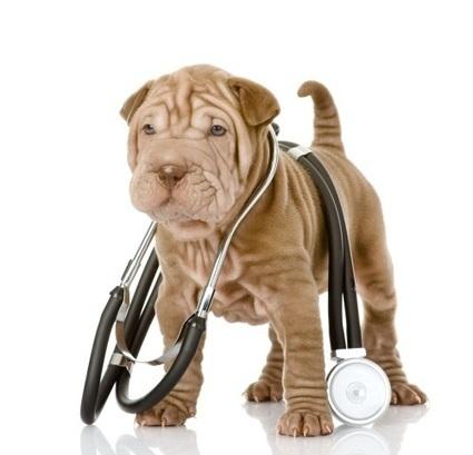 Perros que predicen ataques epilépticos | De animales y bestias | Giza Zientziak eta Geografia | Scoop.it