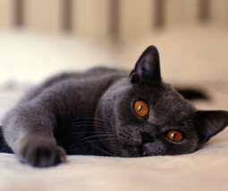 5 Home Objects That Make Great Cat Toys | General culture, Curiosities, Stories | Scoop.it