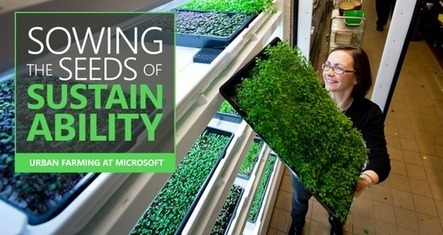 Fresh and Live the Microsoft Way | Vertical Farm - Food Factory | Scoop.it