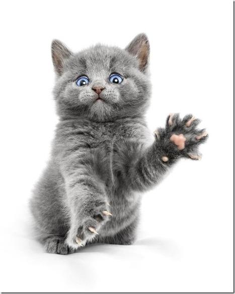 Pet Photography – It's Never Been More Popular!   Photography Tips & Tutorials   Scoop.it