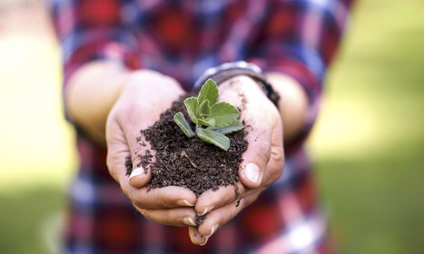 Dirt, Democracy, and Organic Farming: A Recipe to Feed the World | sustainablity | Scoop.it
