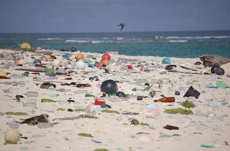 Plastics to outweigh fish in the oceans by 2050: Report | Grade 6 - Diversity of Living Things | Scoop.it
