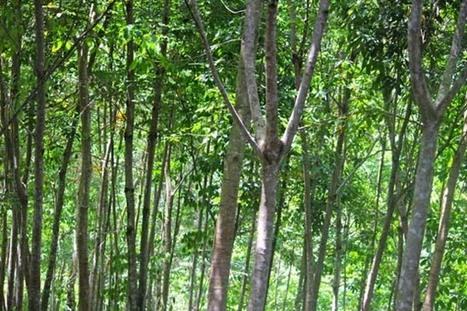 Berharap Usulan 18 Hutan Nagari dari KKN Tematik | Mongabay.co.id | Marine Conservation (Konservasi Laut) | Scoop.it