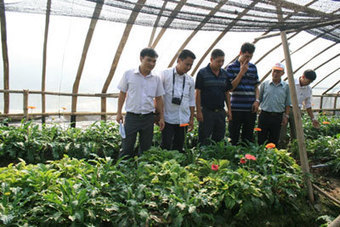 740 farmers provided with floriculture technology | Floriculture in India | Scoop.it