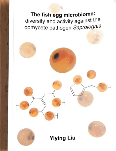 PhD thesis Yiying Liu (2016): The fish egg microbiome: diversity and activity against the oomycete pathogen Saprolegnia | WU_Phyto-Publications | Scoop.it