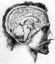 (FR) - PETIT GLOSSAIRE de NEUROBIOLOGIE | Cours de Neurobiologie de l'Université Montpellier | Glossarissimo! | Scoop.it