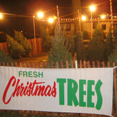 Pick the Perfect Christmas Tree | Natural Soil Nutrients | Scoop.it
