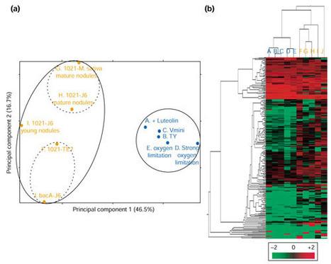 Genome Biology: Transcriptome analysis of Sinorhizobium meliloti during symbiosis | Population genomics of symbiosis | Scoop.it