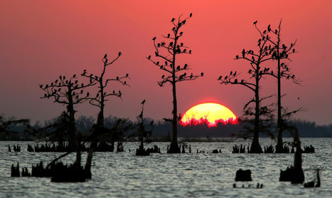 Louisiana governor signs law to block suits against oil industry   Sustain Our Earth   Scoop.it
