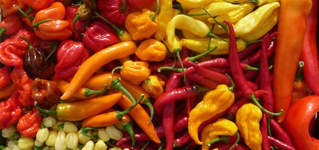 The Wiltshire Chilli Farm | Top UK chilli farm – Wiltshire Chillies | Gower Chillis | Scoop.it