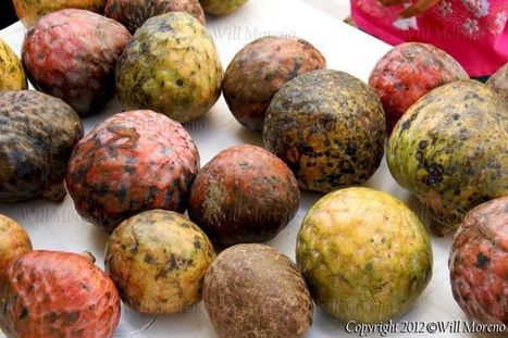 Custard Apple Fruit grown in Belize - Belizeans love eating the pulpy fruit with very sweet condensed milk   Belize in Photos and Videos   Scoop.it