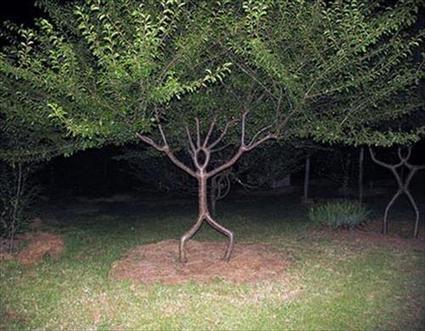 Los beneficios de los árboles : una mirada a los mismos. | Agua | Scoop.it