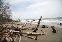 1,200 Acres Of South Carolina's Barrier Islands Have Washed Away In The Last 25 Years   coastal risk   Scoop.it