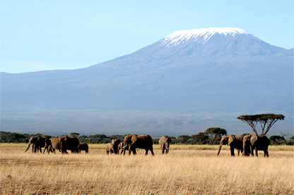 Volunteer In Kenya   Institute of Field Research Expeditions (IFRE)   Scoop.it