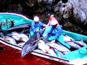 Cancel plans to build a Dolphin Zoo in Taiji . | Rhino poaching | Scoop.it