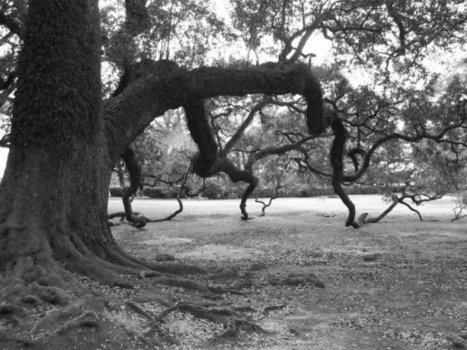 Lisa Alimonti Mikkelsen's Photos | Facebook | Oak Alley Plantation: Things to see! | Scoop.it