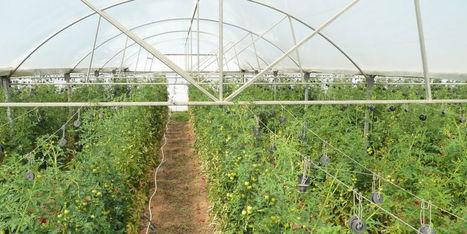 La puissance des données et de l'IA au service de l'agriculture | Veille Scientifique Agroalimentaire - Agronomie | Scoop.it