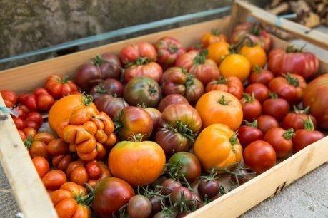 Rafale de tomates fraîches dans les quartiers nord de Marseille | actualité optimiste pour un monde durable | Scoop.it