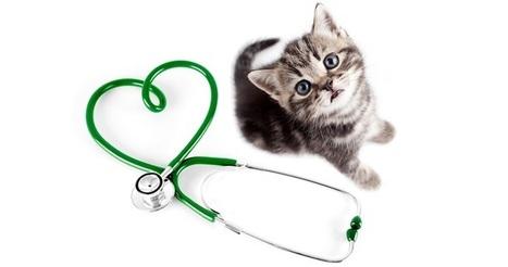 Las enfermedades más comunes en los gatos | Mas mascotas | Scoop.it