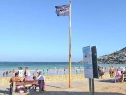 'Curtain' shark nets go up and down daily | Indigo Scuba | Scoop.it