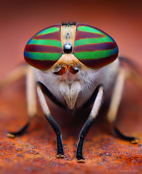 Mind Blowing Macro Insect Photography by Thomas Shahan | Amazing Science | Scoop.it