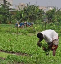 Afrique de l'Ouest : l'agriculture familiale peut nourrir les villes | Questions de développement ... | Scoop.it