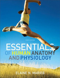 Test Bank For » Test Bank For Essentials of Human Anatomy & Physiology, 10 edition: Elaine N. Marieb Download | Anatomy & Physiology Test Bank | Scoop.it