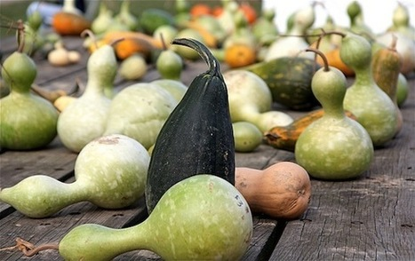Why Is Squash Called Squash? | Food History & New Markets | Scoop.it