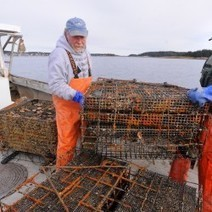 Cages in Maine pilot program could be first step toward farmed ... | Aquaculture (Global Aqua Link) | Scoop.it