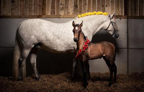 Equine Photography: Daniel Foster   HorsesOne   Scoop.it