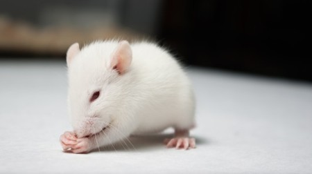 Molecule linking two hormones effectively treats obesity in mice | Longevity science | Scoop.it